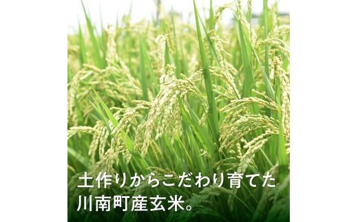 玄米(こしひかり)定期便6ヶ月