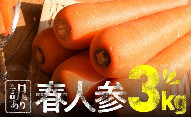 【訳あり】農家直送!春人参3kg (15本~20本入)