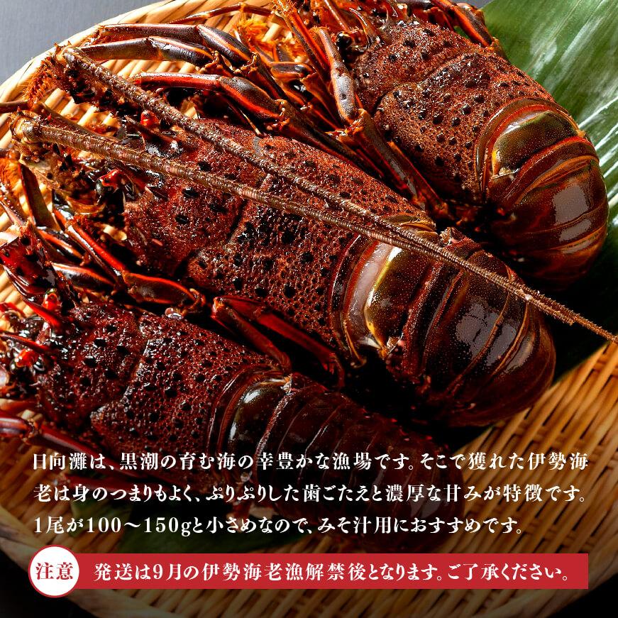 【訳あり】伊勢海老(小)500g(3~5尾)※冷凍※