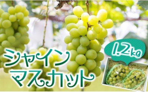 【2020年発送】生産者こだわりのシャインマスカット合計1.2kg(2~3房)