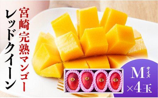 完熟マンゴー『レッドクイーン 』4玉×M (1000g以上)