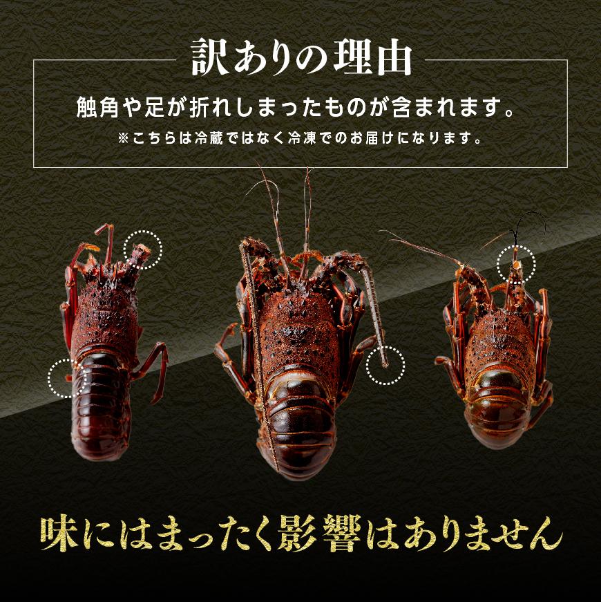 【訳あり】伊勢海老1kg(1~4尾)※冷凍※
