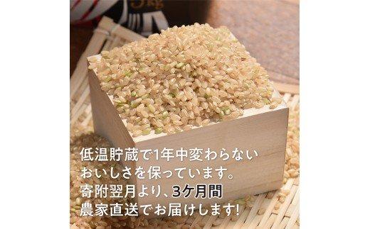 玄米(こしひかり)定期便3ヶ月