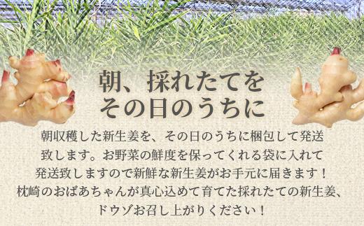 AA-381 朝獲れ新鮮! 鹿児島県枕崎産『新生姜』【計2kg前後】【期間限定】