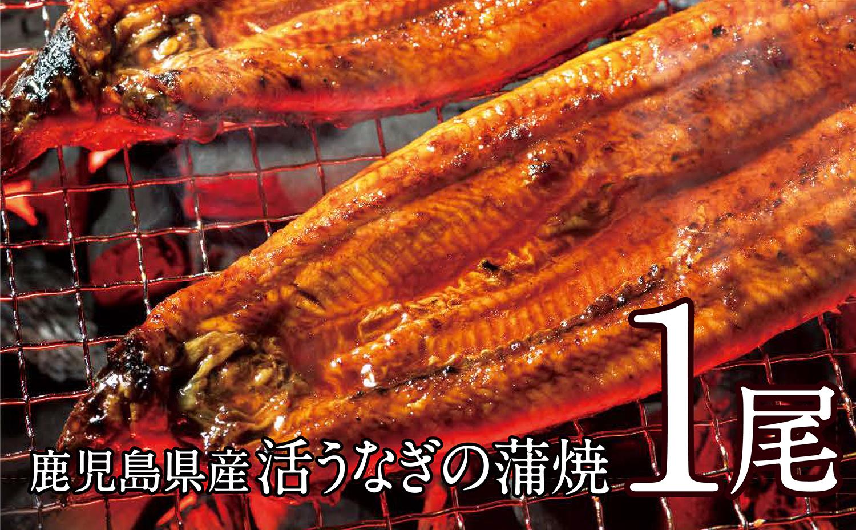 【鹿児島県産】活うなぎの蒲焼1尾