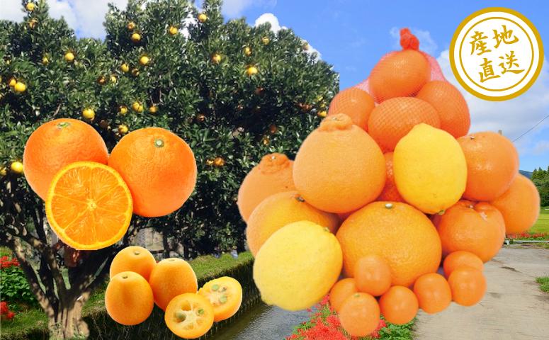 □<12月中旬~1月配送/先行予約>【鹿児島県南さつま市産】旬の柑橘類詰め合わせ
