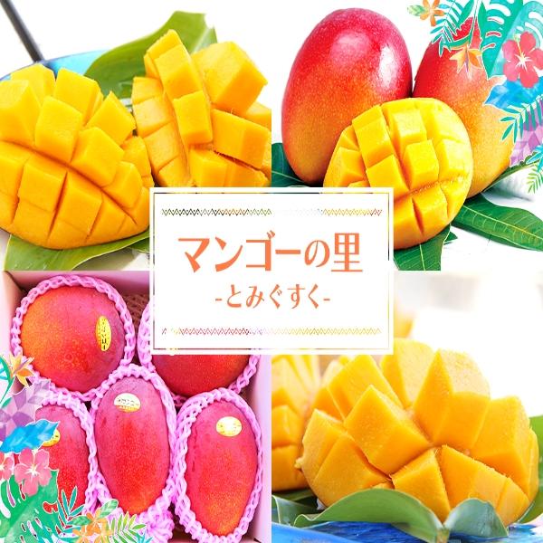 沖縄フルーツ定期便(年12回コース)
