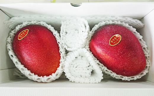 【2021年発送】アップルマンゴー 1kg