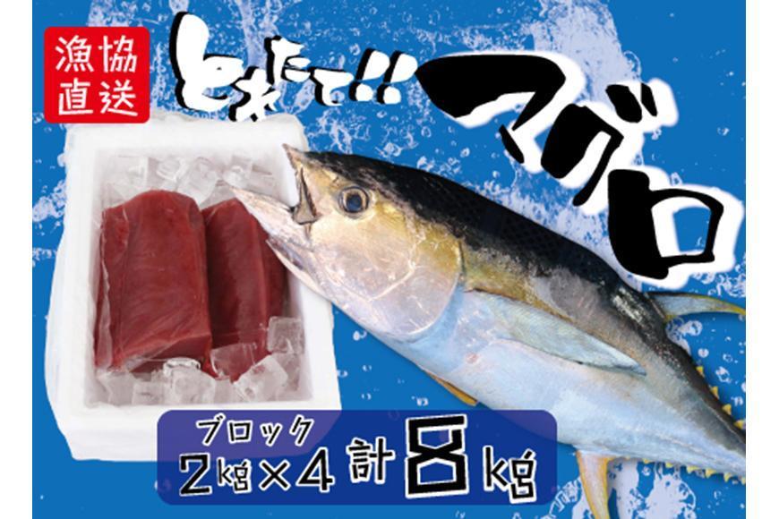 宮古島直送!獲れたて新鮮マグロ 約8kg (ブロック2kg×4)