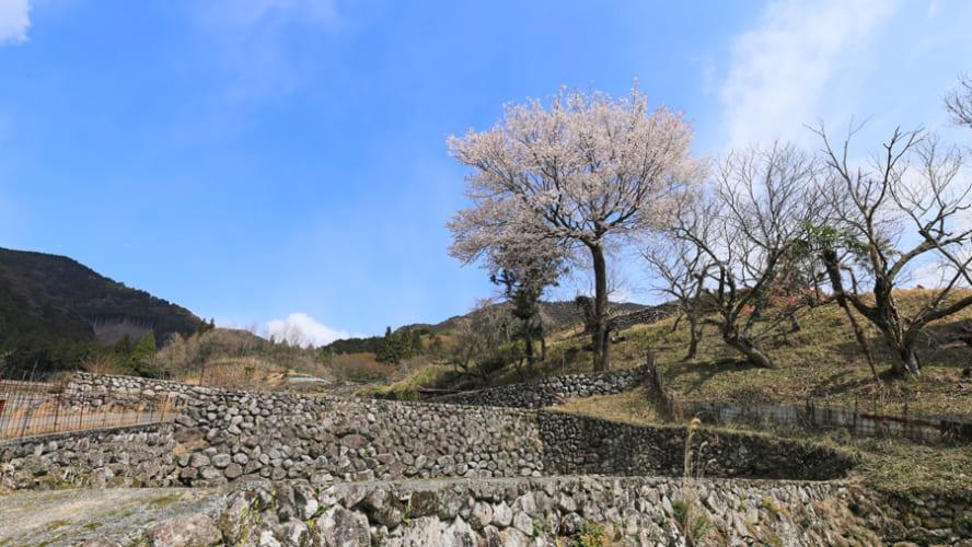 ふるさとパレットに福岡県東峰村が参加しました