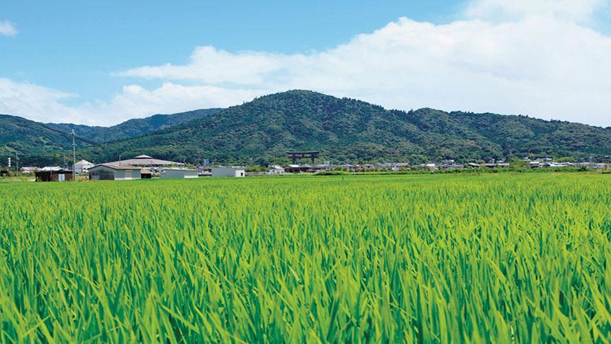 ふるさとパレットに奈良県桜井市が参加しました
